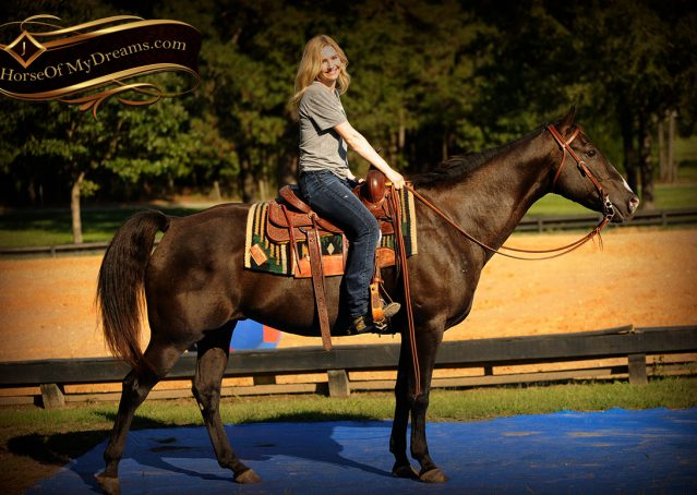 014-Drew-Black-Quarter-Horse-Gelding-For-Sale