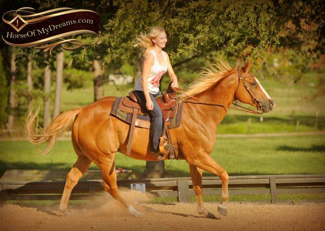 014-Noah-Sorrel-Flaxen-mane-quarter-horse-for-sale