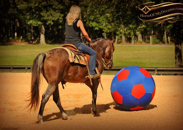 015-Miki-AQHA-Bay-Roan-Gelding-For-Sale