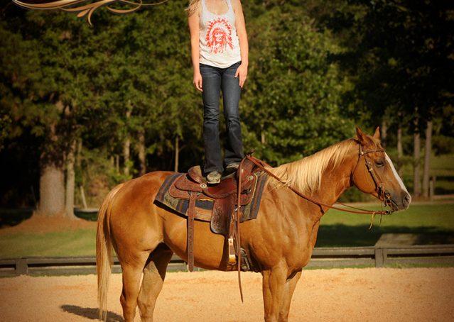 015-Noah-Sorrel-Flaxen-mane-quarter-horse-for-sale