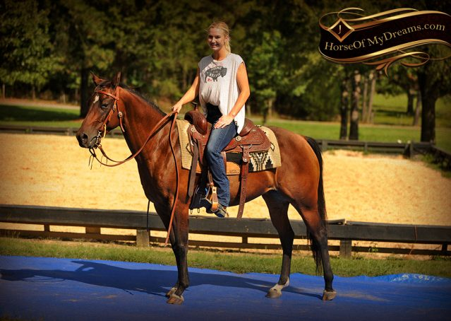 015-Sabrina-AQHA-Sophisticated-Catt-Bay-Mare-For-Sale