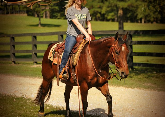 015-Superbowl-Bay-AQHA-Gelding-For-Sale
