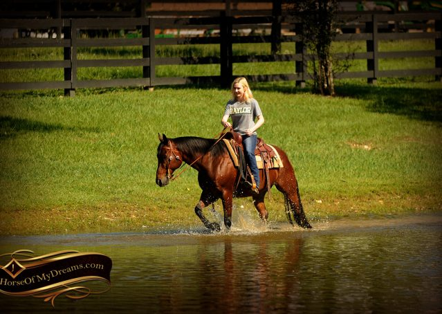 016-Superbowl-Bay-AQHA-Gelding-For-Sale