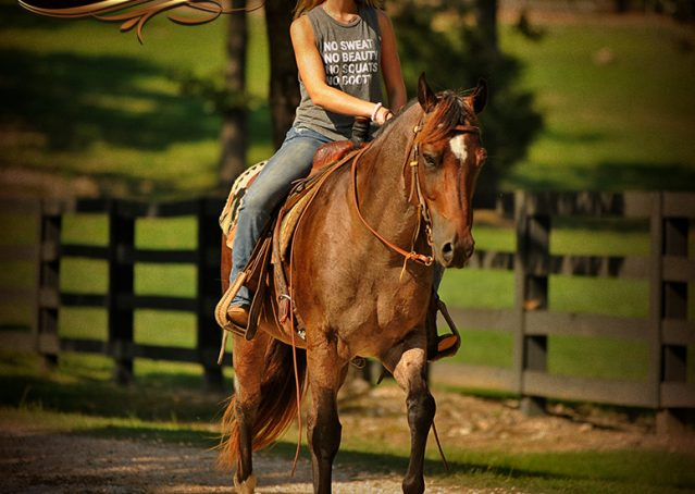 017-Miki-AQHA-Bay-Roan-Gelding-For-Sale
