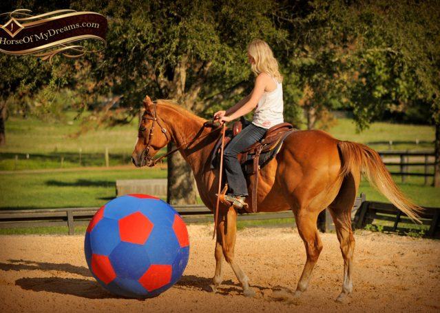 017-Noah-Sorrel-Flaxen-mane-quarter-horse-for-sale