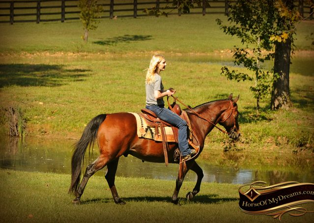 017-Superbowl-Bay-AQHA-Gelding-For-Sale