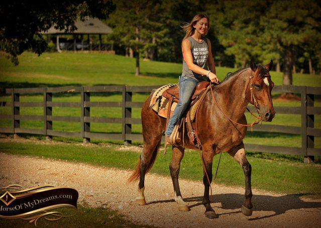 018-Miki-AQHA-Bay-Roan-Gelding-For-Sale