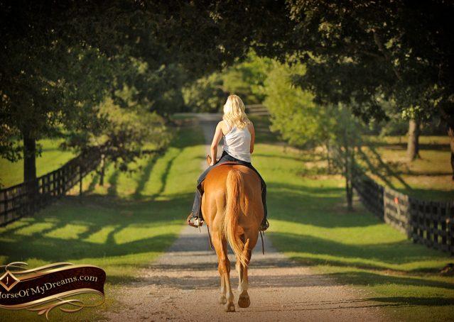 018-Noah-Sorrel-Flaxen-mane-quarter-horse-for-sale