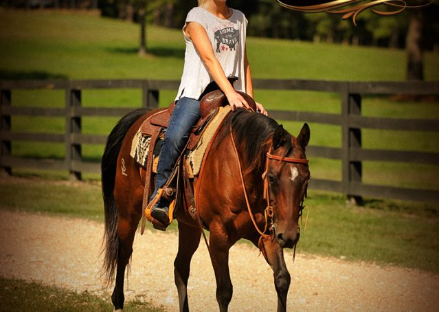 018-Sabrina-AQHA-Sophisticated-Catt-Bay-Mare-For-Sale