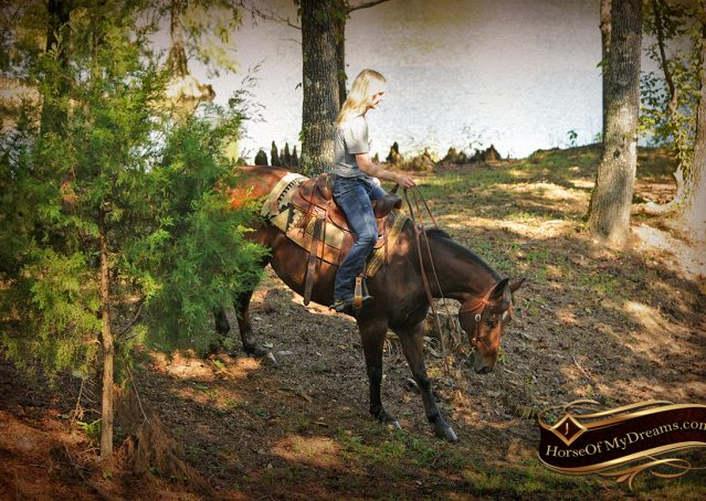 018-Superbowl-Bay-AQHA-Gelding-For-Sale