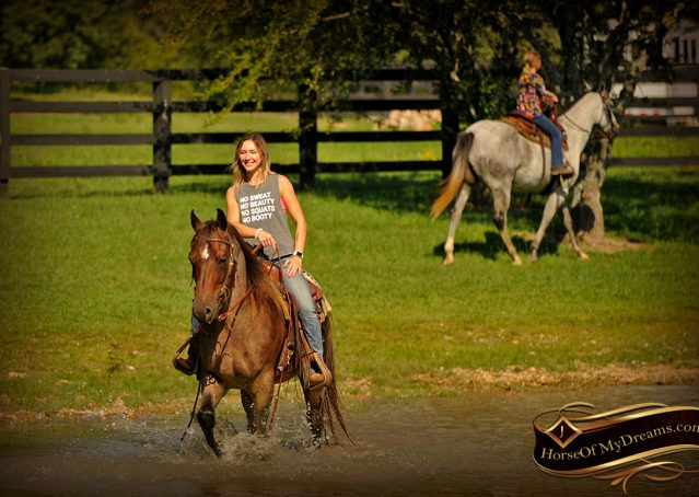 019-Miki-AQHA-Bay-Roan-Gelding-For-Sale