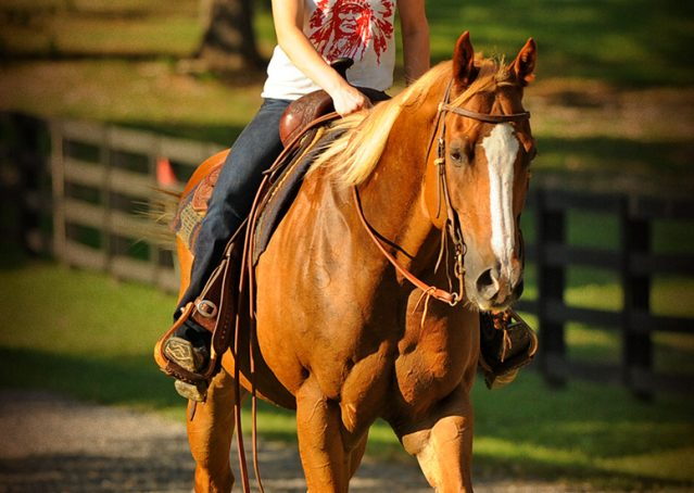 019-Noah-Sorrel-Flaxen-mane-quarter-horse-for-sale