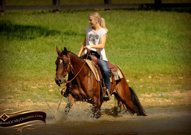 019-Sabrina-AQHA-Sophisticated-Catt-Bay-Mare-For-Sale