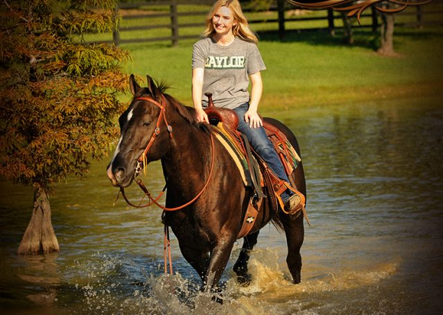 020-Drew-Black-Quarter-Horse-Gelding-For-Sale