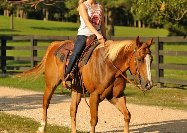 020-Noah-Sorrel-Flaxen-mane-quarter-horse-for-sale