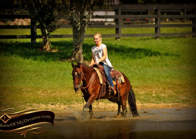 020-Sabrina-AQHA-Sophisticated-Catt-Bay-Mare-For-Sale