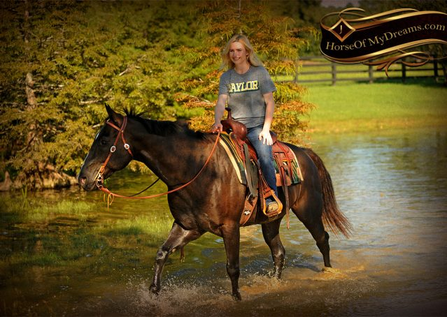 021-Drew-Black-Quarter-Horse-Gelding-For-Sale