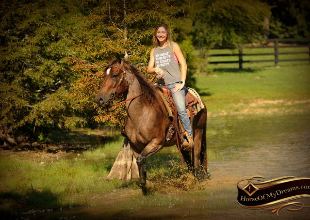 021-Miki-AQHA-Bay-Roan-Gelding-For-Sale