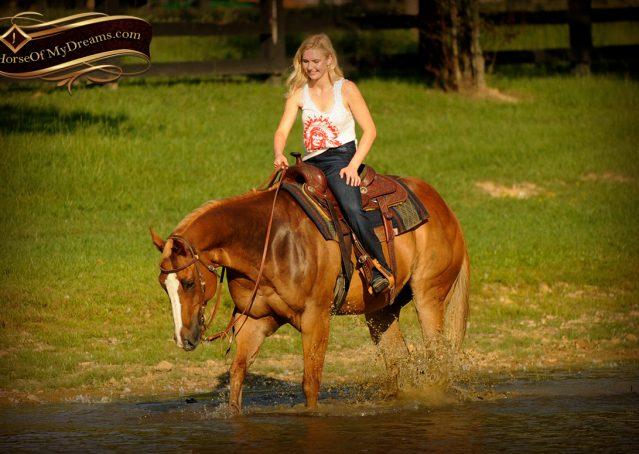 021-Noah-Sorrel-Flaxen-mane-quarter-horse-for-sale