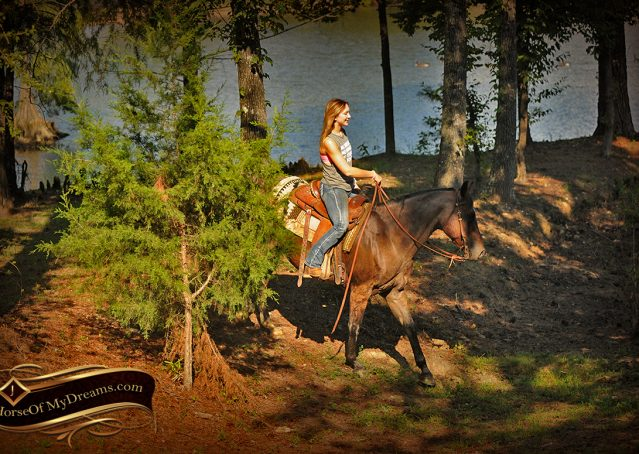 022-Miki-AQHA-Bay-Roan-Gelding-For-Sale