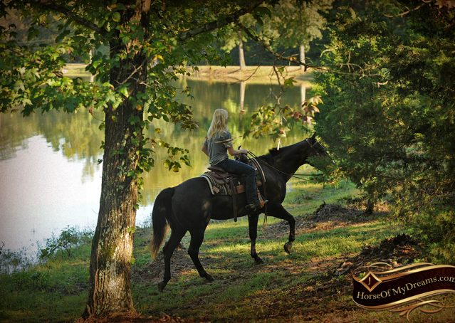 023-Drew-Black-Quarter-Horse-Gelding-For-Sale