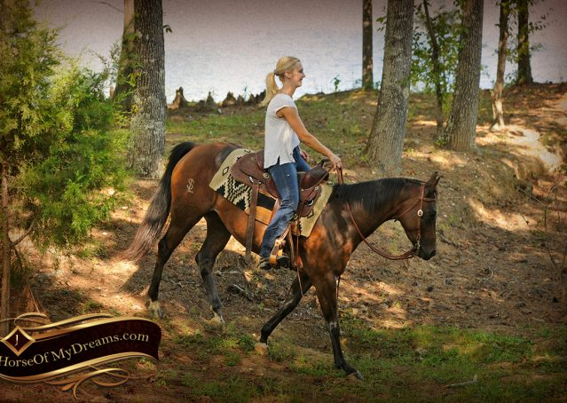 023-Sabrina-AQHA-Sophisticated-Catt-Bay-Mare-For-Sale