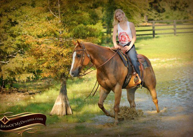 024-Noah-Sorrel-Flaxen-mane-quarter-horse-for-sale