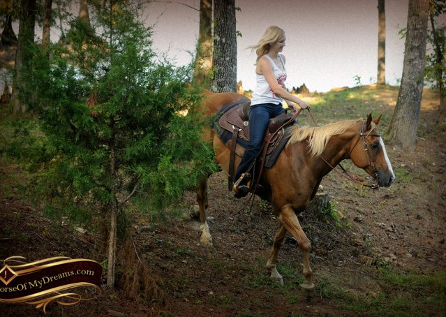 025-Noah-Sorrel-Flaxen-mane-quarter-horse-for-sale