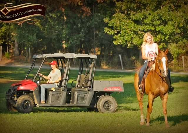 026-Noah-Sorrel-Flaxen-mane-quarter-horse-for-sale