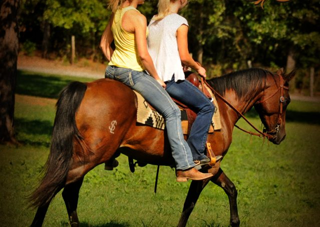 027-Sabrina-AQHA-Sophisticated-Catt-Bay-Mare-For-Sale