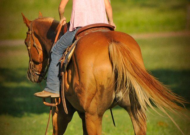 028-Noah-Sorrel-Flaxen-mane-quarter-horse-for-sale