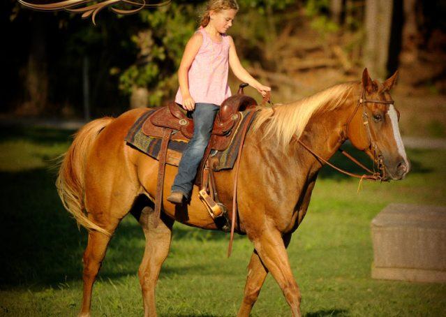 029-Noah-Sorrel-Flaxen-mane-quarter-horse-for-sale