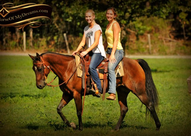029-Sabrina-AQHA-Sophisticated-Catt-Bay-Mare-For-Sale