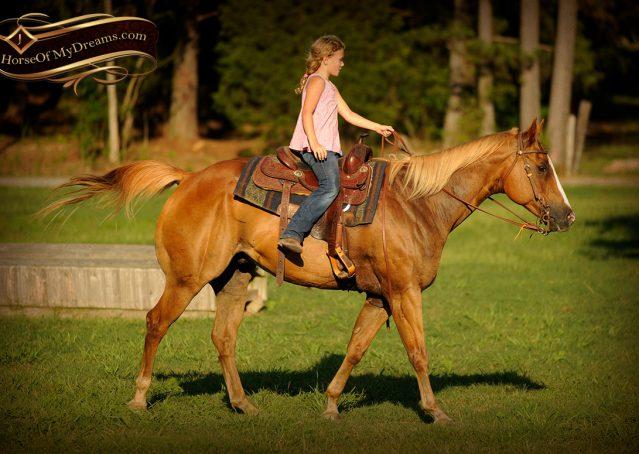 030-Noah-Sorrel-Flaxen-mane-quarter-horse-for-sale