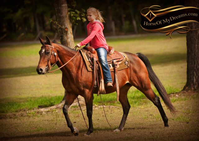030-Sabrina-AQHA-Sophisticated-Catt-Bay-Mare-For-Sale