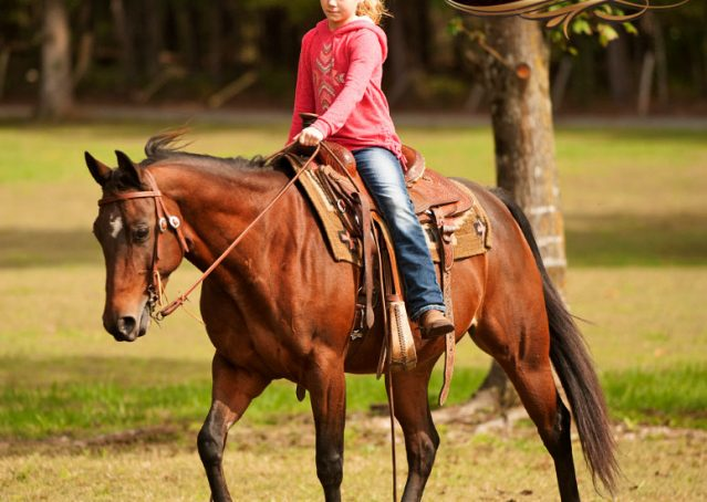 031-Sabrina-AQHA-Sophisticated-Catt-Bay-Mare-For-Sale