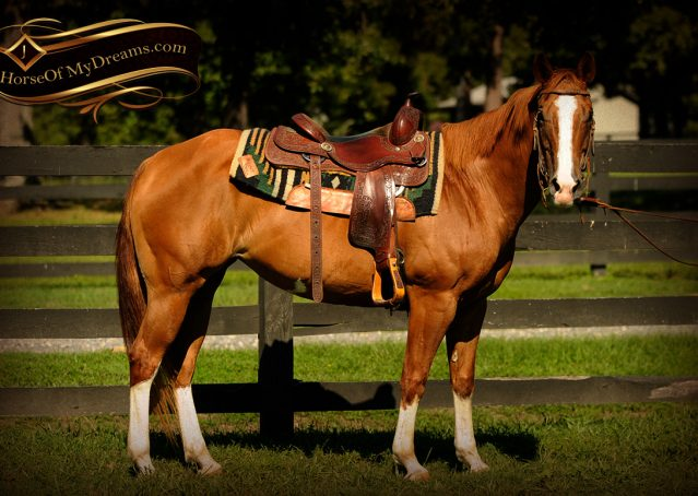 002-Fancy-Sorrel-AQHA-mare-for-sale