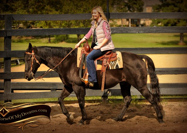 002-Frankie-Black-AQHA-Gelding-for-Sale