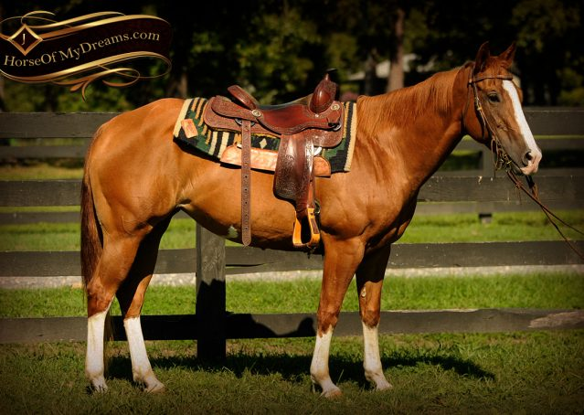 003-Fancy-Sorrel-AQHA-mare-for-sale