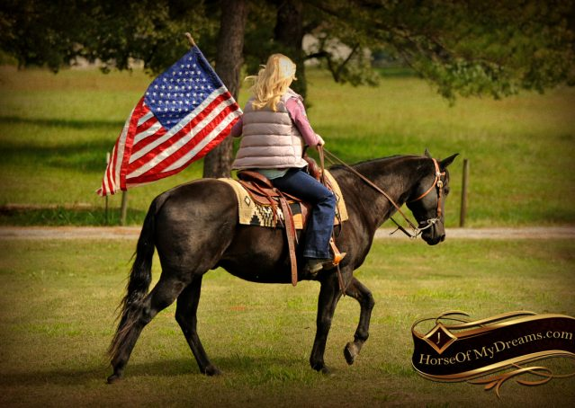 003-Frankie-Black-AQHA-Gelding-for-Sale