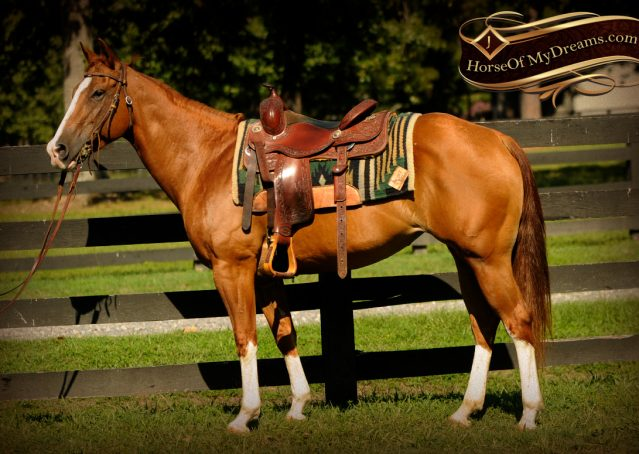 004-Fancy-Sorrel-AQHA-mare-for-sale