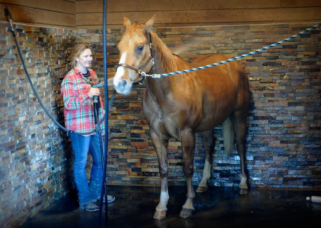 004-Torch-Red-Dun-AQHA-Gelding-For-Sale