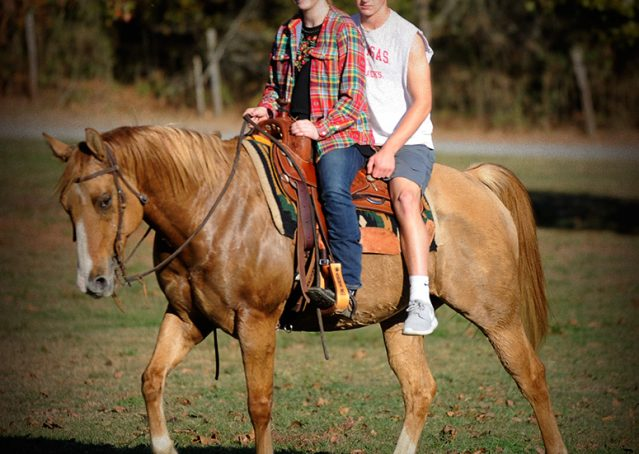 005-Torch-Red-Dun-AQHA-Gelding-For-Sale