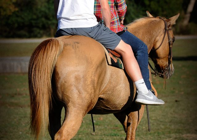 006-Torch-Red-Dun-AQHA-Gelding-For-Sale