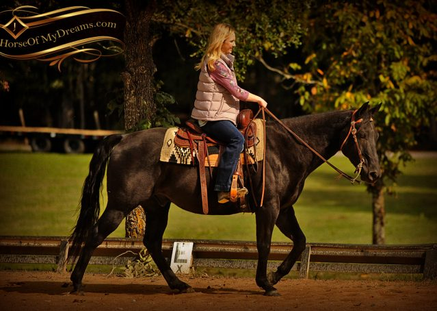 007-Frankie-Black-AQHA-Gelding-for-Sale