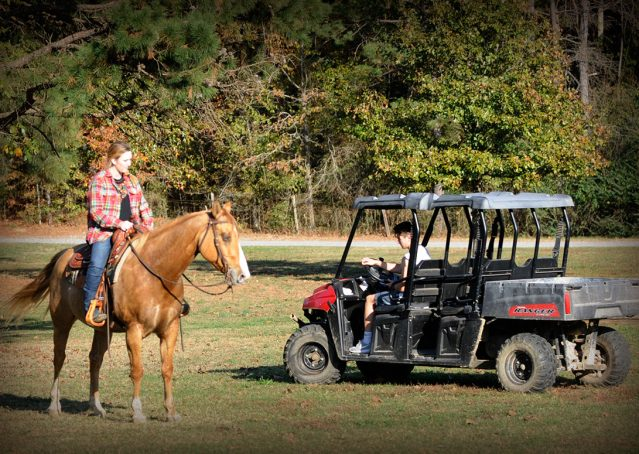 007-Torch-Red-Dun-AQHA-Gelding-For-Sale
