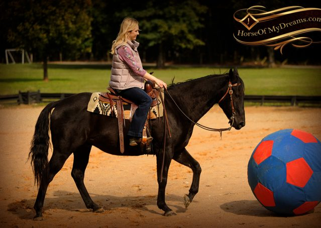 008-Frankie-Black-AQHA-Gelding-for-Sale