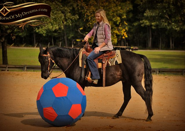 009-Frankie-Black-AQHA-Gelding-for-Sale