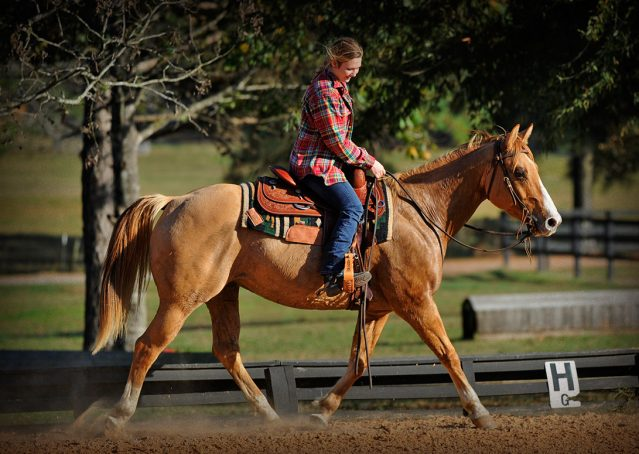 010-Torch-Red-Dun-AQHA-Gelding-For-Sale