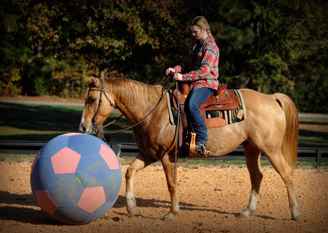 011-Torch-Red-Dun-AQHA-Gelding-For-Sale